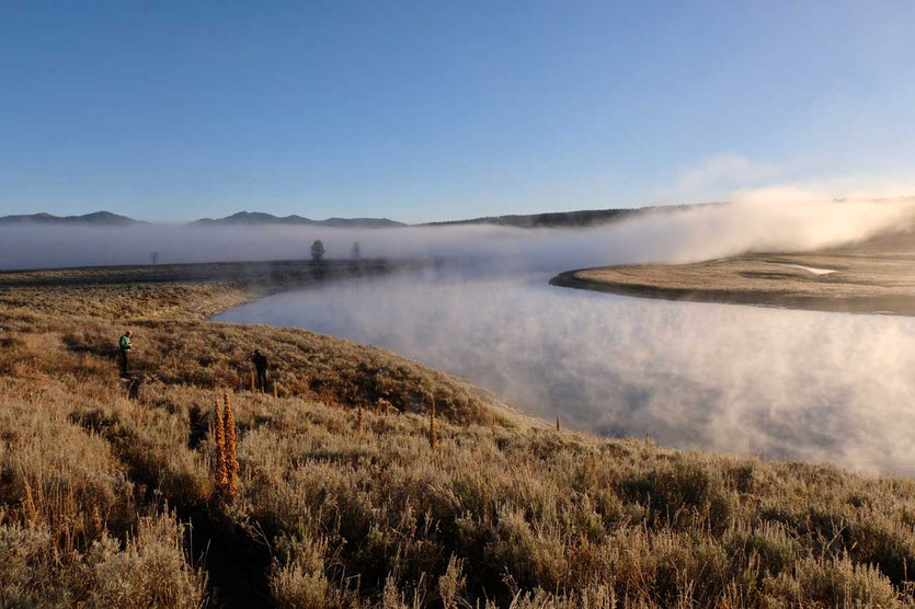 Morning Hayden Valley Yellowstone River Nationalpark