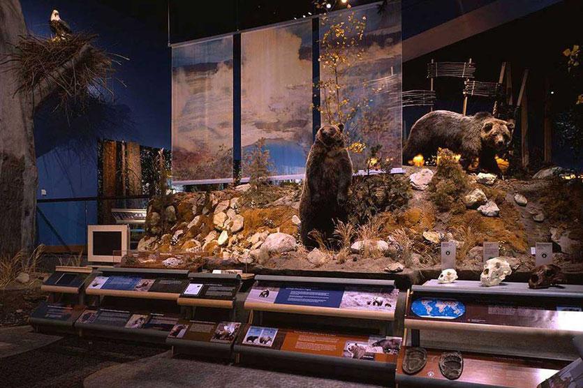 Draper Natural History Museum Cody Bären-Abteilung