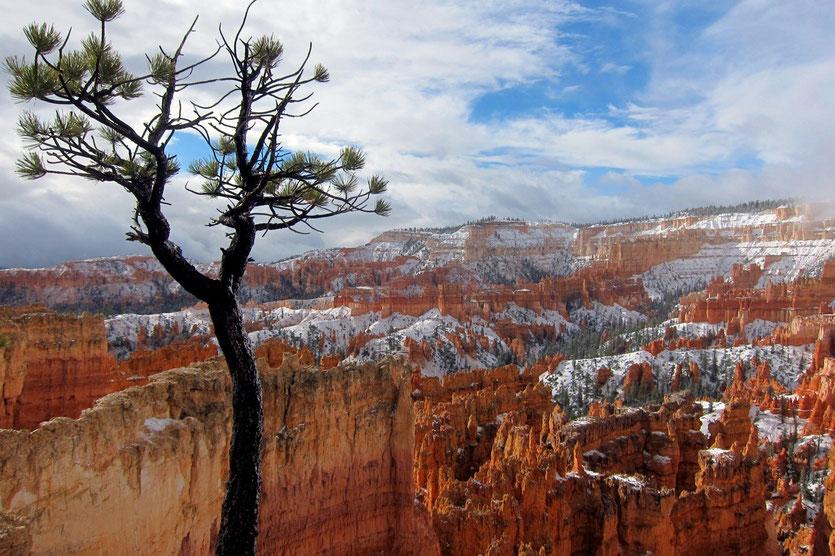 Bryce Canyon nach kurzen Schneeschauer