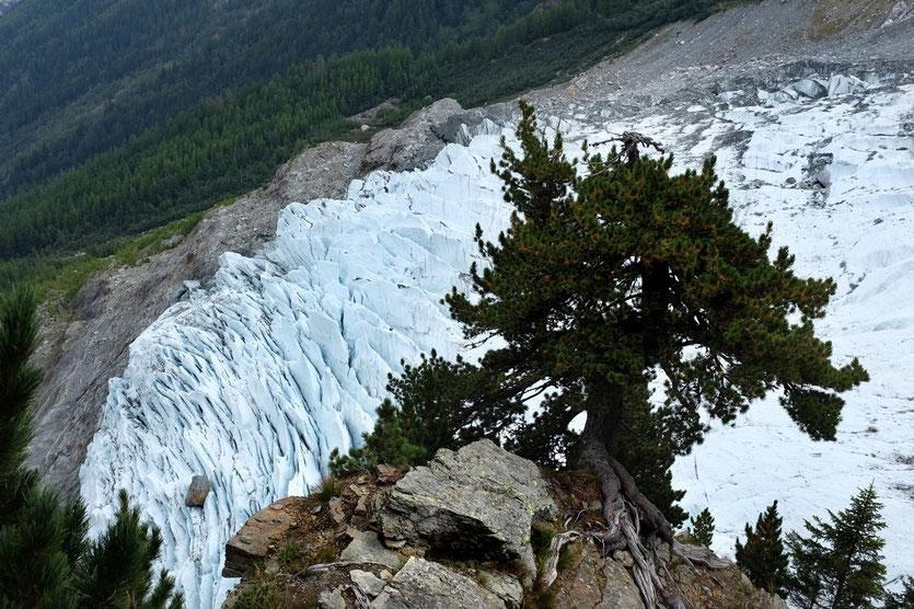 Trail Chalet des Pyramides, Glacier des Bossons Mont Blanc Chamonix