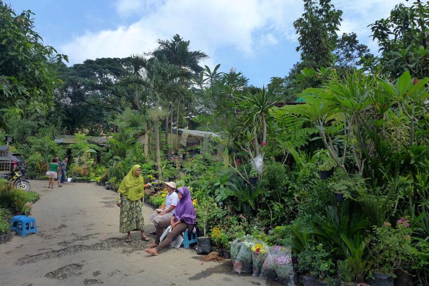 Flower market in Malang Java