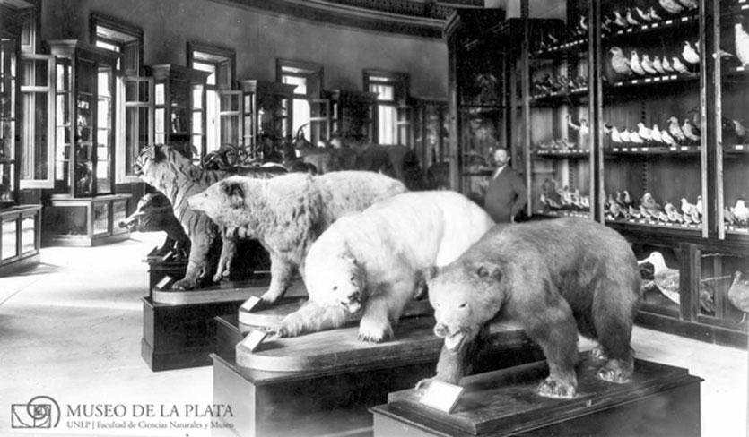 Aus einer Sammelleidenschaft entstand das LA PLATA Museum in Buenos Aires