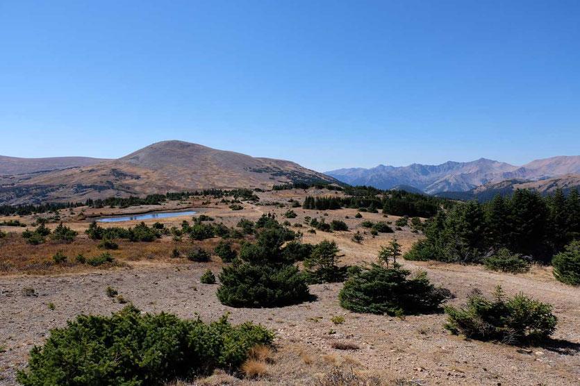 Geduckt wachsen die Kiefern noch auf 3.500m im Rocky Mountains Nationalpark