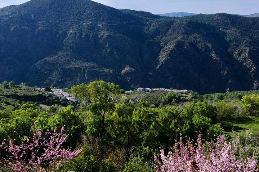 Der Blick von Hotel  La Oveja Verde de la Alpujarra in Pitres