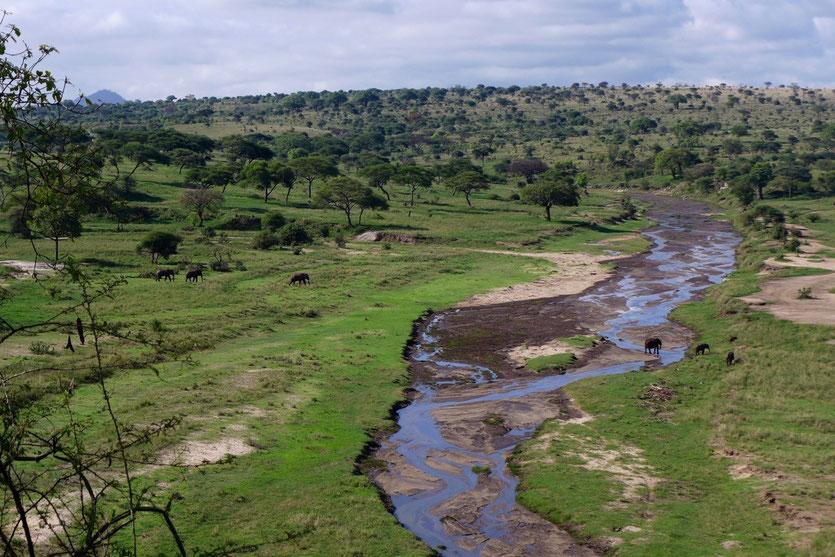 Tarangire Nationalpark Elefantenfluss Safari Tansania