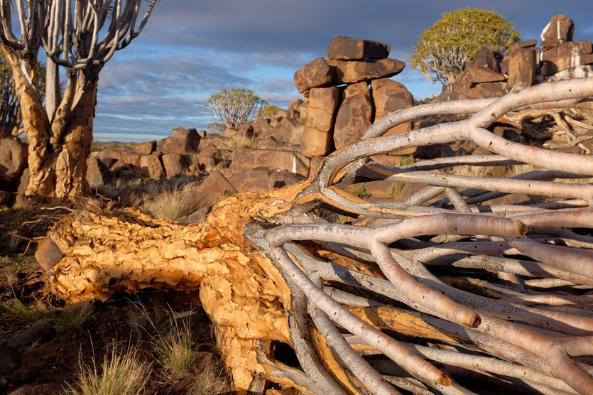 Mesosaurus Fossil Site Camp Namibia