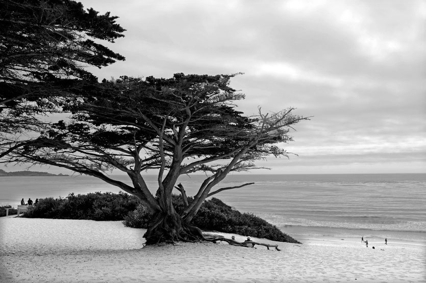 Beach Carmel California
