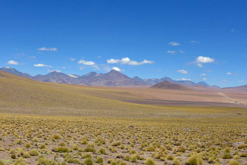 Ichu Büschelgra Landschaft auf dem Weg zu El Tatio Atacama