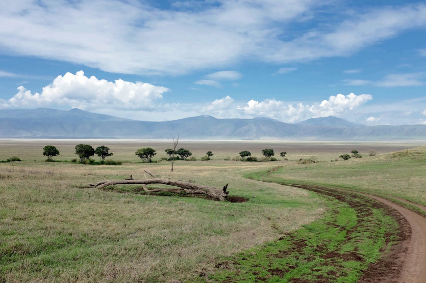 Ngorongoro crater park fee game drive