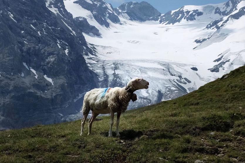 Südtirol Vinschgau Höhenweg Ortler Panorama Wanderung