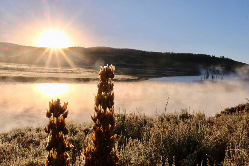 Morgennebel Hayden Valley Yellowstone NP