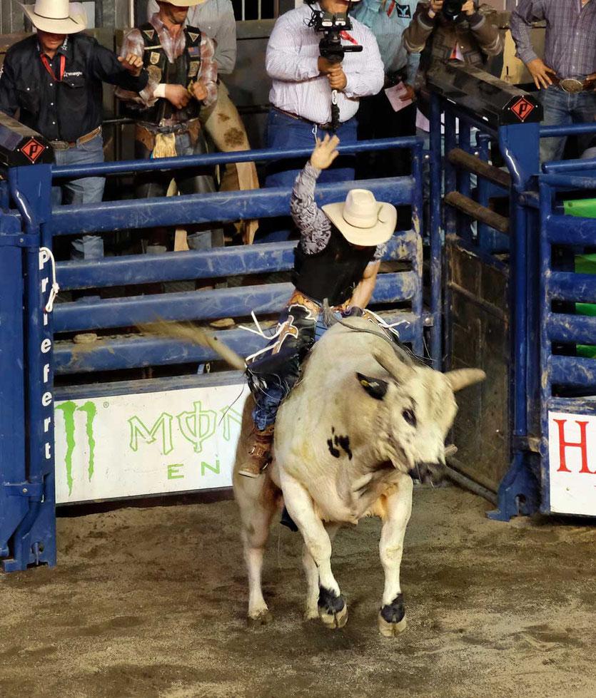 Profi Bull Riding Rodeo Pendleton Round Up Oregon