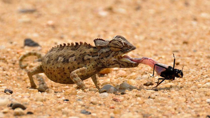 Living Desert Tour Swakopmund Namibia