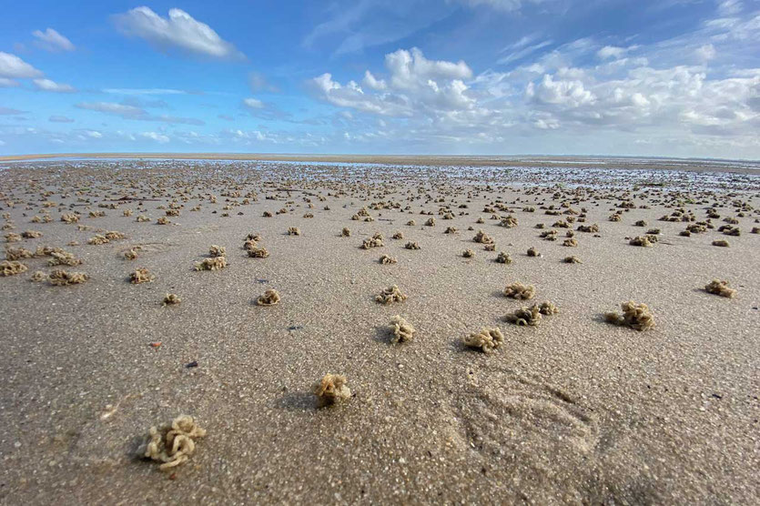 Strand Wattseite von Kampen Sylt