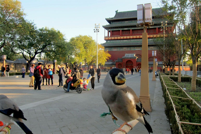 trommelturm peking, drum tower beijing
