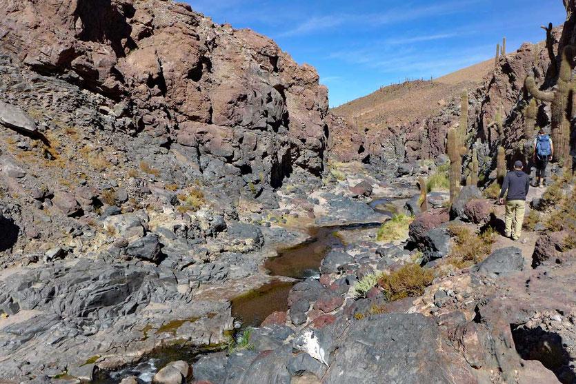 Kaktustal Wanderung bei Guatín, Atacama