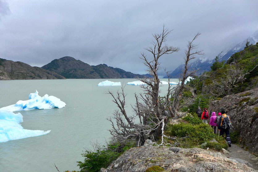 Kurze Wanderung zum Mirador Lago Grey, Torres del Paine
