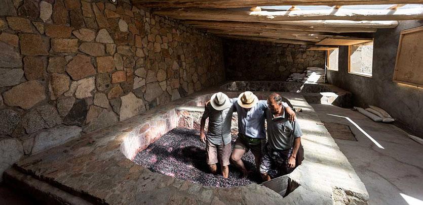 Traubentreter von Viñedos de Alcohuaz