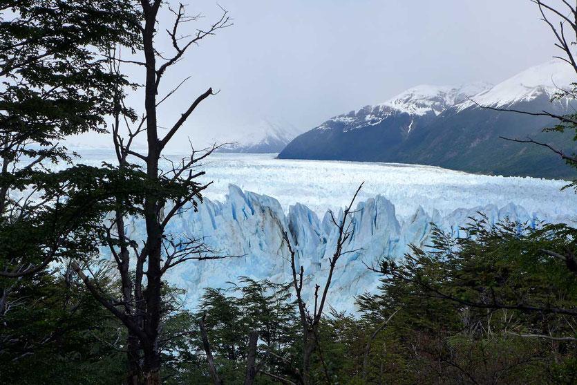 Weg durch den Lenga-Wald Perito Moreno Aussichtsstege Nationalpark Los Glaciares