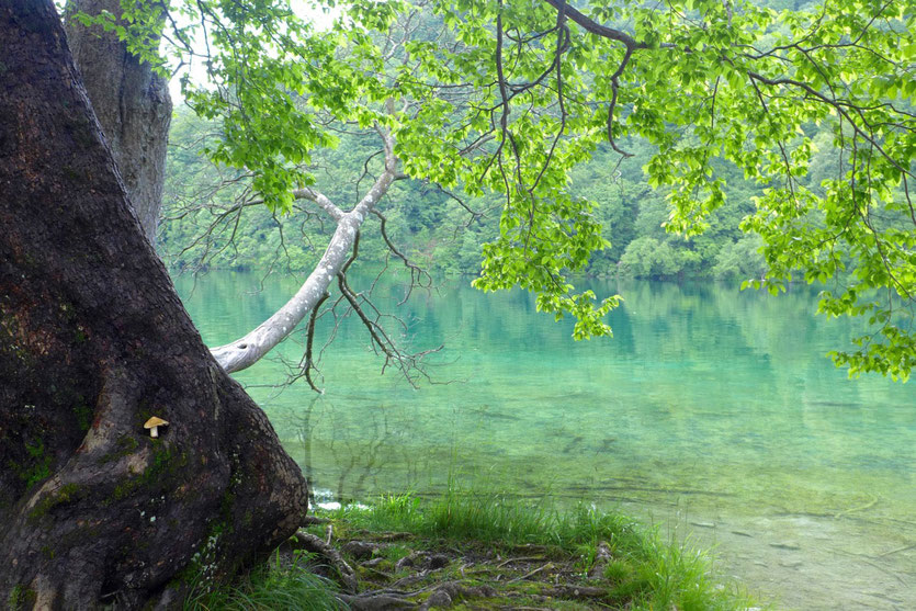 Wasserfälle Kroatien Plitvicer Seen Plitvicer lakes national park croatia