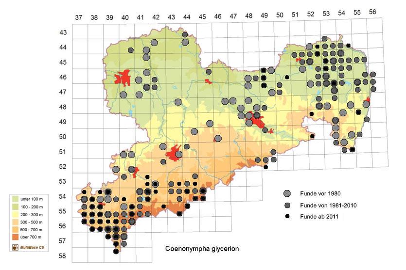 Vorkommen von Coenonympha glycerion in Sachsen ab 2007