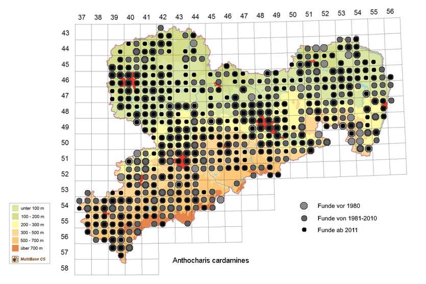 Anthocharis cardamines, Aurorafalter, in Sachsen, Tagfalter Pollrich