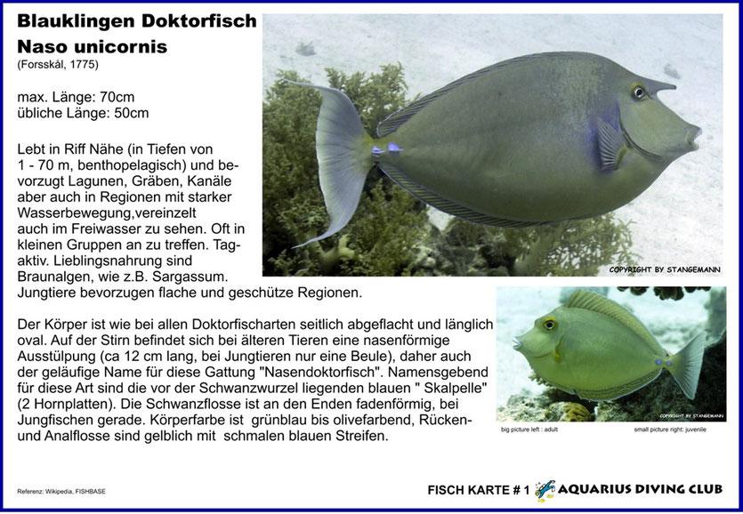 Fisch Karte # 1