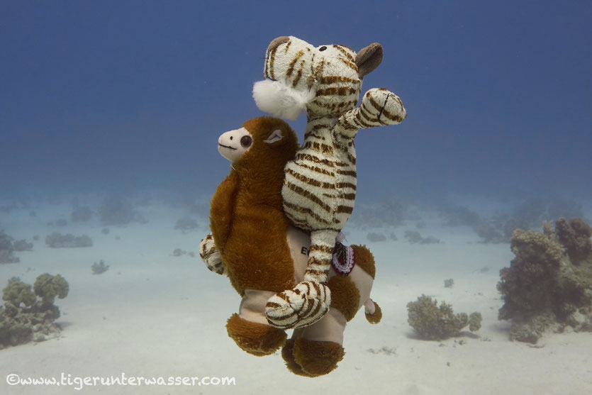Arielle is riding on a seahorse....i ride a sea camel....