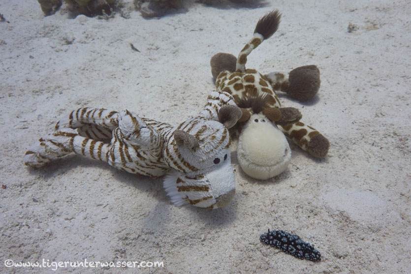 Look Marvin, a snail....