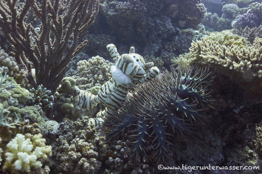 ....Underwater Fakier.....