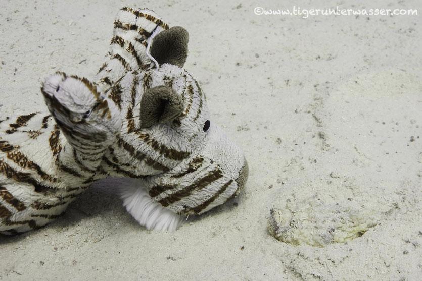 Oh a xxs size stonefish...