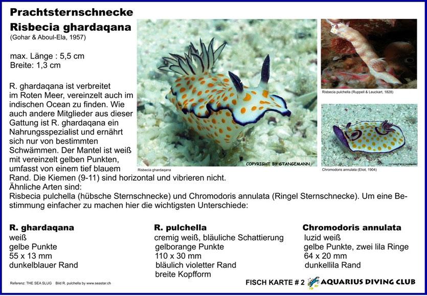 Fisch Karte # 2