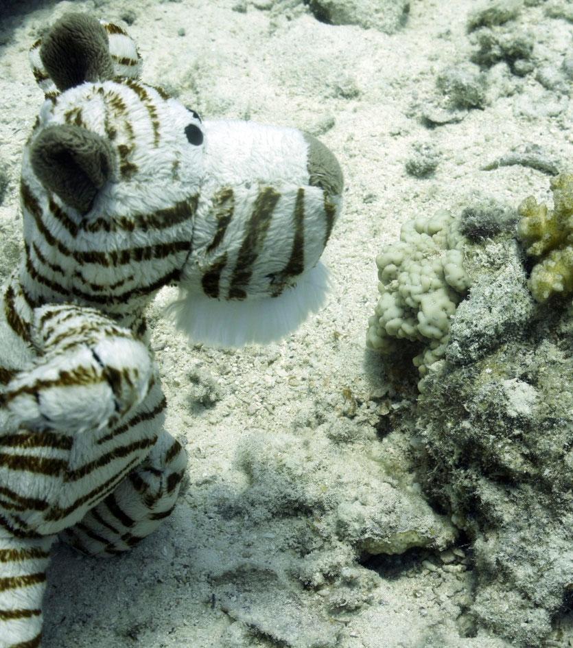 Zurück in Hurghada gleich wieder ins Meer....Hm, waren die nicht größer?..