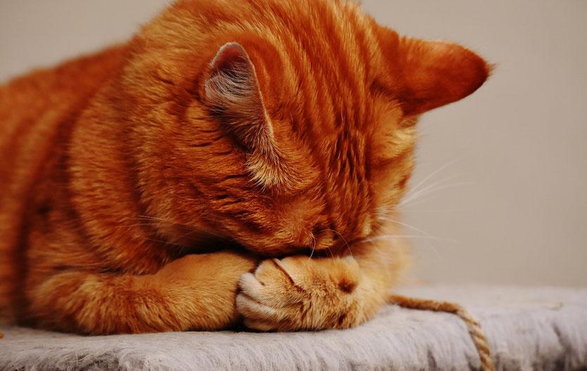 Katzenpsychologin klärt auf: Protestpinkeln gibt es nicht