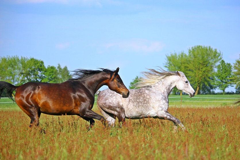 Pferdepsychologin über Sportpferde und Haltungssysteme