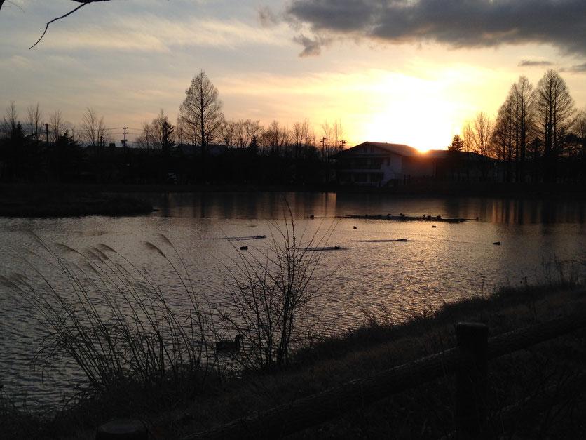 大賀ホール前の池。奥の静かな水面が氷です。