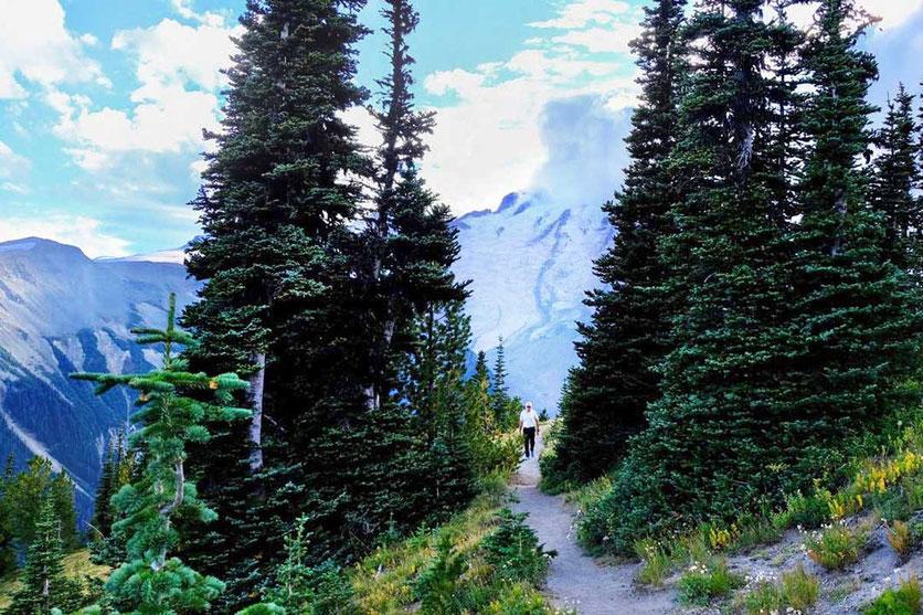 Wandern auf dem Silver Forest Trail, Mt. Rainier National Park