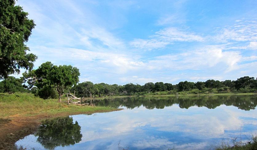 landscape Yala Nationalpark Sri Lanka