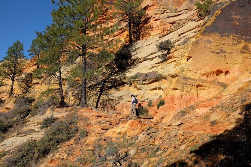 schönste Wanderung Zion NP Observation Point Trail