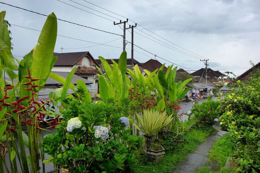 Bali Bergland Norden Munduk