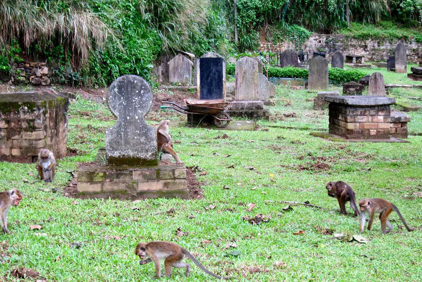 British Garrison Cemetery Friedhof in Kandy Sri Lanka