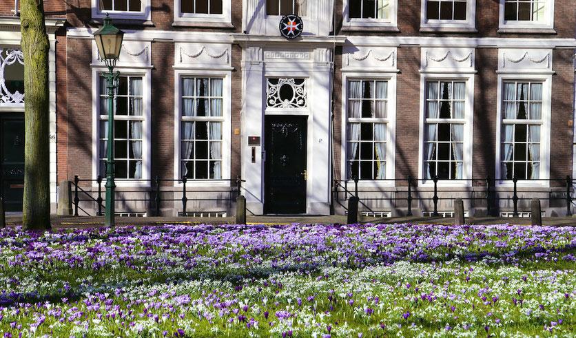 Den Haag im Frühling: Krokusse auf dem Platz Lange Voorhout