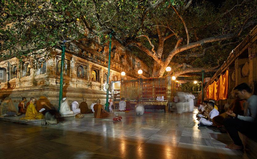 Bodhgaya, Bodhi Baum, Siddhartha Gautama