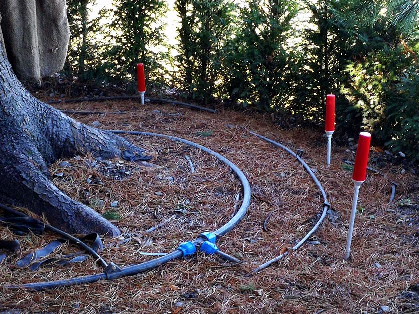Bild: Umpflanzung einer 17m hohen Konifere vom Engadin nach der Innerschweiz.