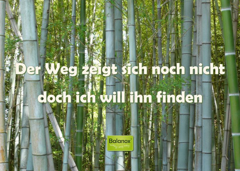 Balanox Bildbotschaft: Der Weg zeigt sich noch nicht, doch ich will ihn finden
