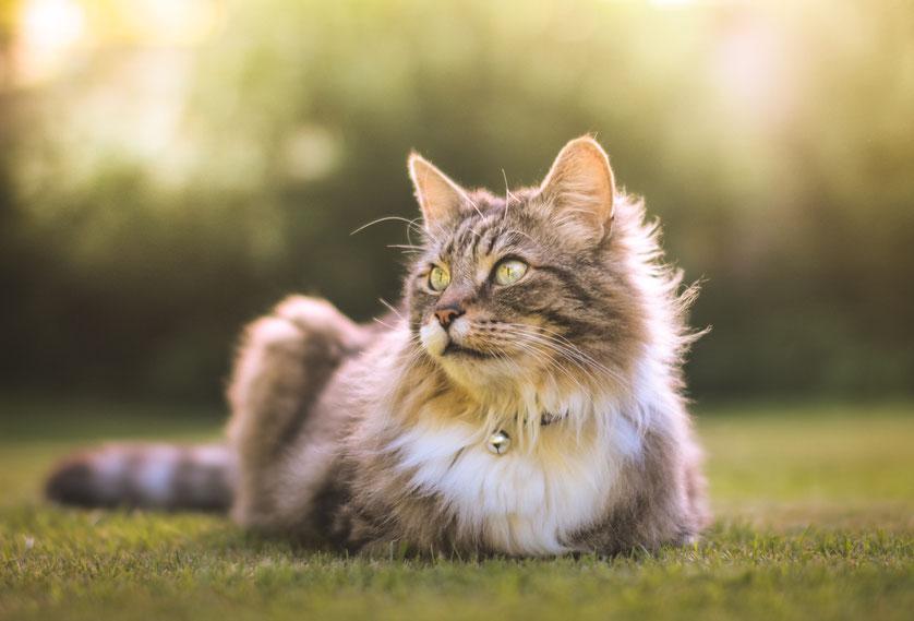 Kommunikation mit Tiere, Tieren, Pferde, Hunde, Katzen, Vögel, Kaninchen, Wildtiere