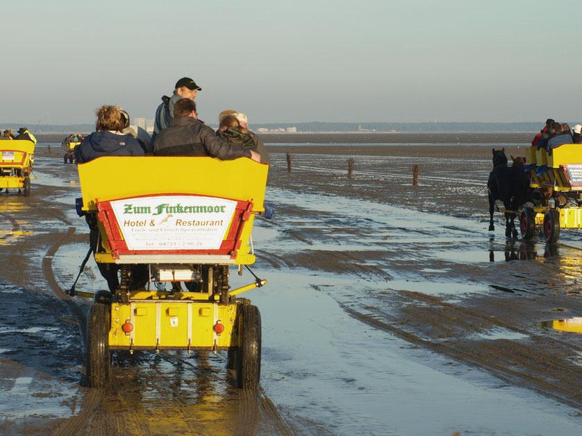 Wattwagenfahrt auf dem Grund der Nordsee