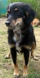 Biba fand ihr Zuhause über Hundelebenretten