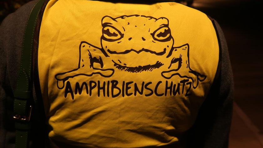 Für die Amphibien unterwegs zu sein, heisst auch auf der Strasse zu sein.