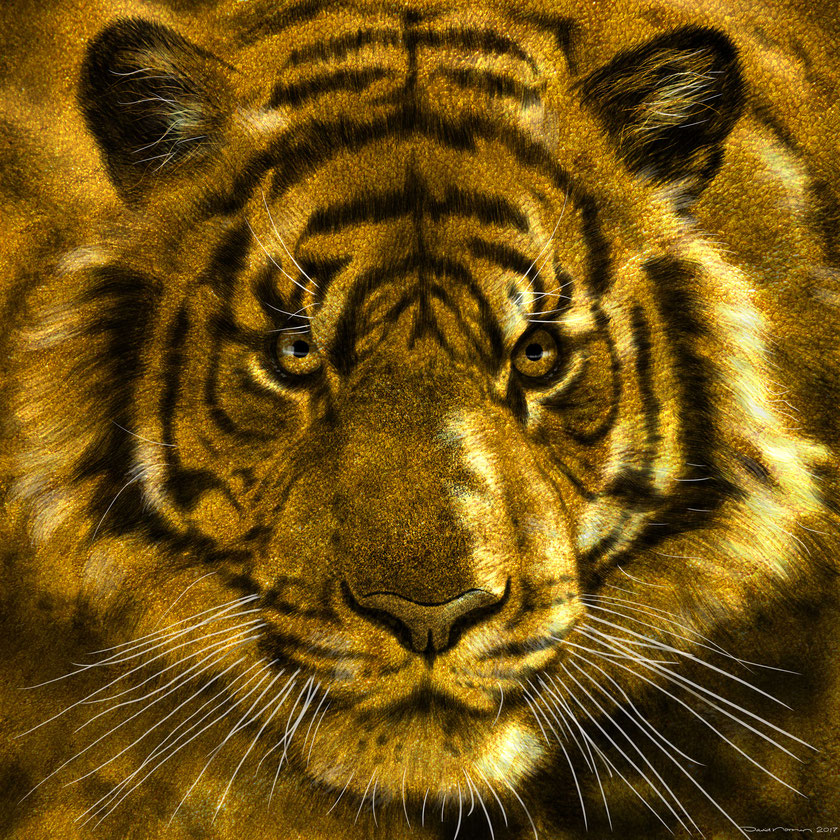 Tiger_Studie_David Norman